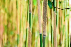 bamboo-paille